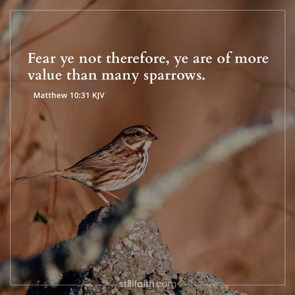Matthew 10:31 KJV Image